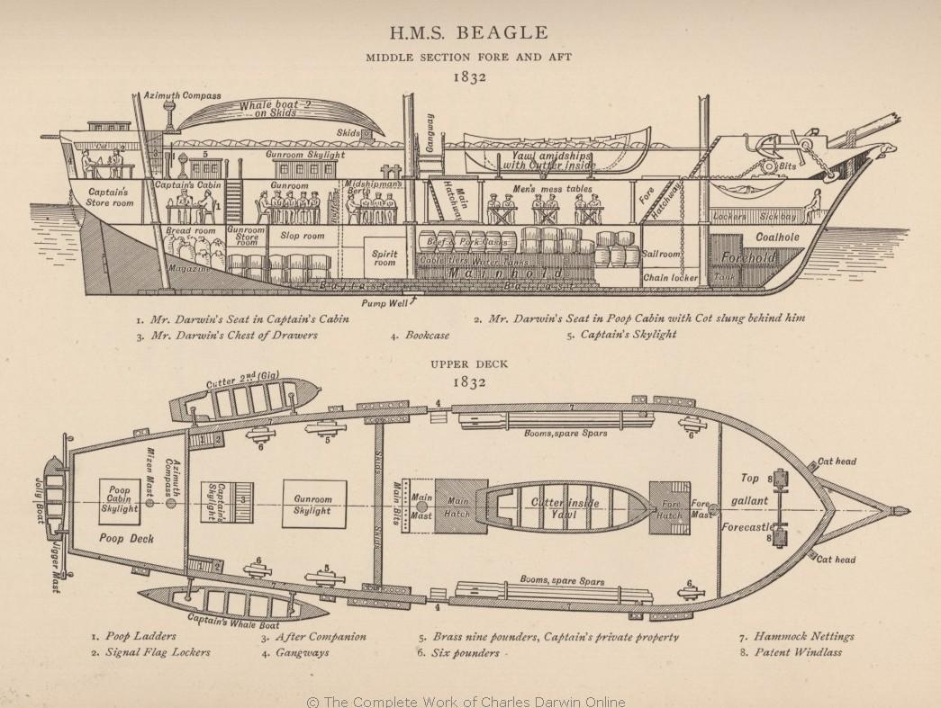 HMS Beagle (Корабль Его Величества «Бигль»). Автор рисунка: Philip Gidley King. 1890. Библиотека и каюта Дарвина обозначена на схеме как poop cabin.