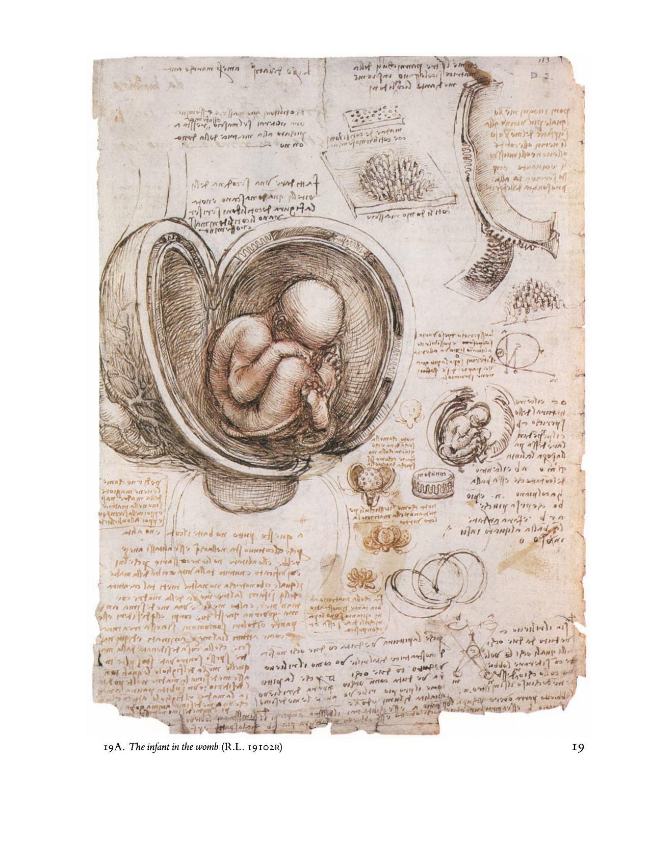 Leonardo da Vinci: Anatomical Drawings from the Royal