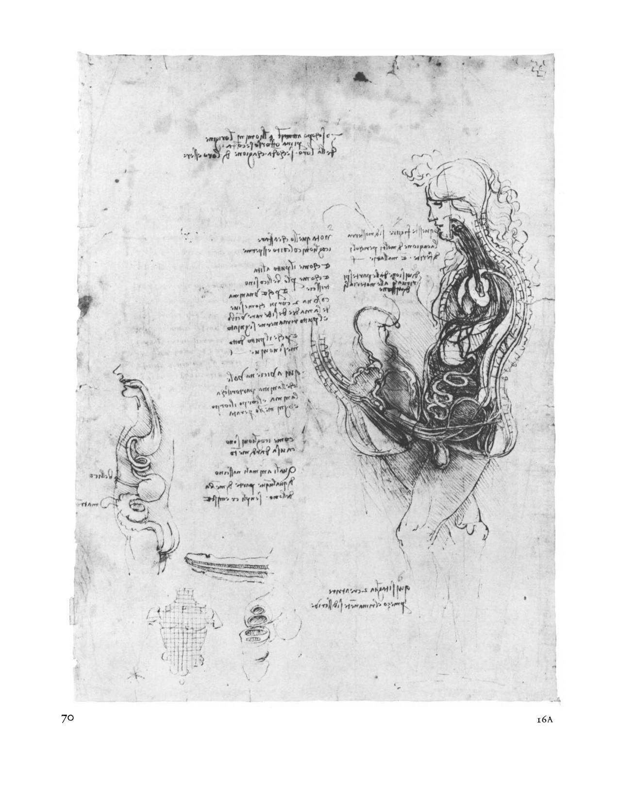Da Vinci Catalogue of Drawings | November 2019 Notes from