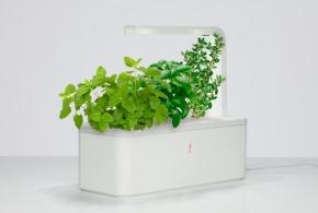 умный сад