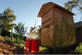 Flow Hive: извлечение мёда без вскрытия улья