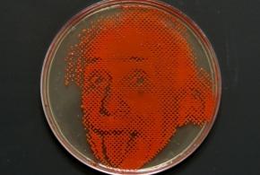Эйнштейн из бактерий