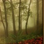 Утро туманное. Фотография нанесенная на холст.