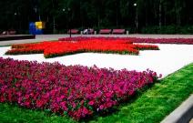 Цветники на Центральной площади (2011).