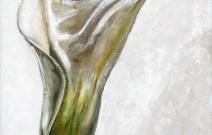 «Калла». Холст/масло, размер 50x75 см. Дата создания: 25.08.2011.