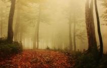 Заблудиться в тумане. Фотография нанесенная на холст.